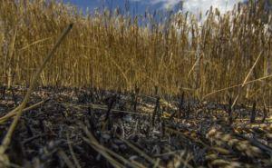 С 1Виюля на Донбассе планируются В«урожайноеВ» перемирие. Что нужно для его реального соблюдения,— мнение
