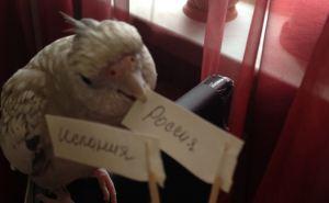 Попугай из Луганска уверенно предсказал победу сборной России над Испанией