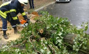 Из-за урагана в Рубежном дерево упало на легковое авто, а трасса Марковка-Новопсков была заблокирована