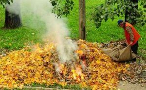 Луганчанам напомнили о запрете на сжигание опавших листьев и сухой травы