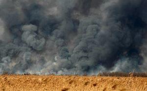 В Донецкой области выгорело 13 га пшеничного поля