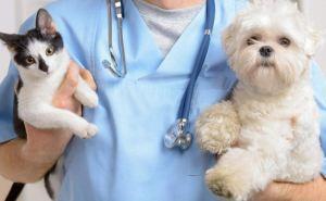 В Меловом началась вакцинация животных