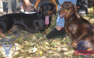 В луганском Парке 1Мая прошла выставка собак. ФОТО