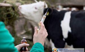 Диспансеризация сельскохозяйственных животных пройдет в Луганске 17октября