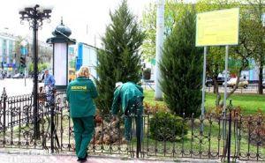 В Луганске по улице Советской высадили более 10 тысяч кустов бирючины