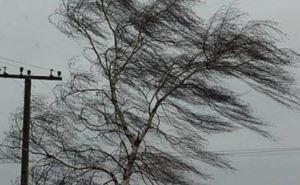 В Луганске усиление ветра до штормового