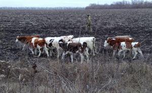 Россия вернула Украине 3 корабля, а Украина вернет России 12 коров