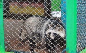 Луганский зоопарк в «Парке имени 1Мая» готов к зиме (фото)