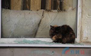 Жители Веселой Горы возвращаются в родные дома и просят помощи в восстановлении жилья. ФОТО