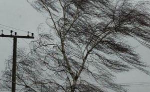 В 7 областях Украины из-за ветра, дождя и снега обесточен 251 населенный пункт