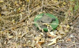 На берегу Северского Донца погиб мужчина наступив на противопехотную мину