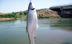 Две рыбы внесены в Красную Книгу ЛНР