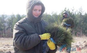 Под Луганском высадили 15 тыс. саженцев крымских сосен. ФОТО