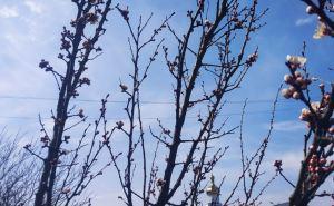 Завтра в Луганске днем воздух прогреется до 15 градусов тепла