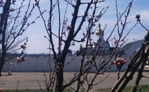 Прихожане высадили на территории луганского храма 150 кустов роз. ФОТО. ВИДЕО