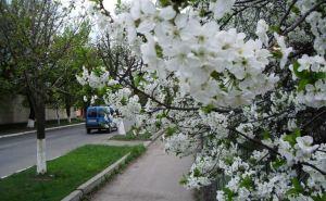 Прогноз погоды в Луганске на 8апреля