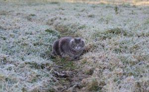 Ночью и завтра утром в Луганске ожидаются заморозки до минус трех градусов