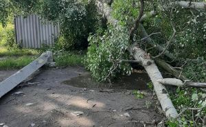 Ураган в Сватово вырвал деревья и повалил столбы