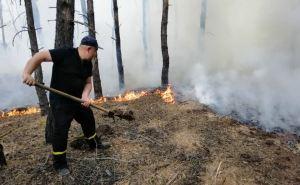 По состоянию на 7 утра 9июля еще горят участки трех лесничеств в Новоайдарском районе