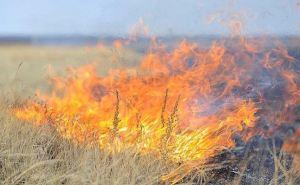 Под Славяносербском масштабный степной пожар на 300 гектарах