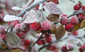 С понедельника на Луганщине ожидаются сильные заморозки