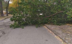 В Луганске убирают поваленные деревья и устраняют другие последствия сильного штормового ветра. ФОТО