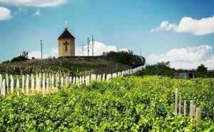 Виноделов Савиных знают не только на Луганщине