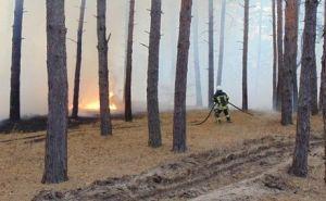 Погибших от пожаров уже пять, десять человек госпитализированы. Особо сложная ситуация у Станицы Луганской