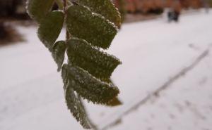 В Луганске выпал первый снег— местами мокрый и сильный. ФОТО