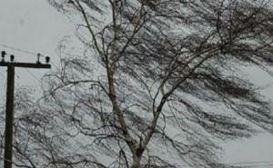В Луганске 30ноября утром и днем усиление ветра до 70 км в час