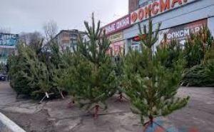 В Луганске разрешили еще 6 елочных базаров