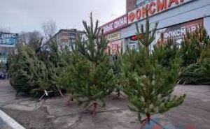 В Луганске проводят проверки елочных базаров