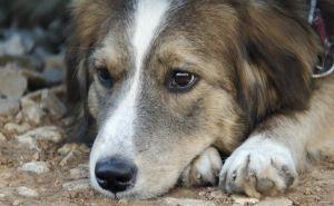 В центре Луганска прямо возле детского сада ведется отстрел бродячих собак