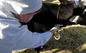 В Луганске отчитались о проведенной вакцинации. ФОТО