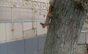 Наглые белки живут в центре Донецка. ФОТО