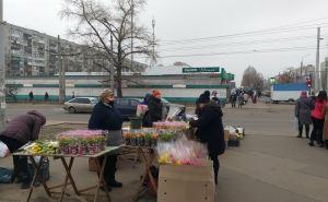 Цветочный ажиотаж перед 8марта в Северодонецке. Где какие цены