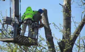В Луганске выявили почти 500 опасных деревьев