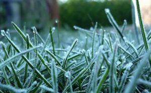 Заморозки до 3 градусов мороза ожидаются ночью и утром 18апреля