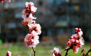 Какие дни будут выходными в мае для луганчан