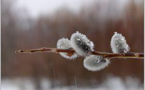 Прогноз погоды в Луганске на 21апреля
