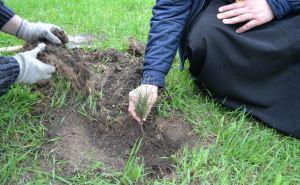 25 новых сосен высадили в Луганске у храма «Умиление»