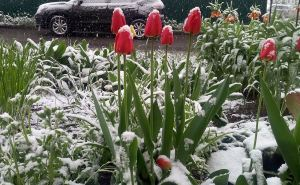 Прогноз погоды на май: не прячьте теплые вещи
