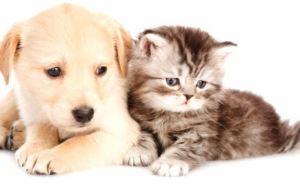 В Госветслужбе рассказали о ввозе и вывозе домашних животных