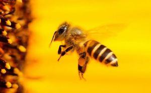 Укрпошта больше не будет перевозить пчёл