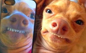 Минздрав просит в приложении «ВДОМА» не фотографировать животных или интересные части тела