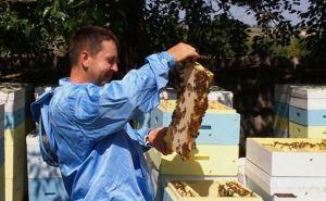 ЛОГА обеспечит пчёлам «рабочие места»