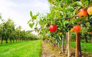 В Луганске до конца года посадят 50 гектаров фруктовых садов