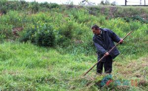 За траву у дома луганчан будут штрафовать