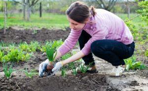 Правдали, что до Троицы нужно успеть посадить весь огород?