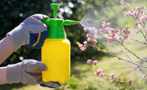 Какие работы в июне нельзя пропустить в саду